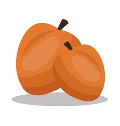 Apricot nutrition healthy image vector
