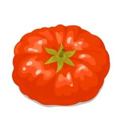 Big tomato 2 vector image