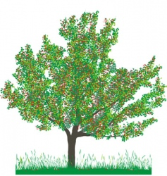 cherry tree in summer vector image