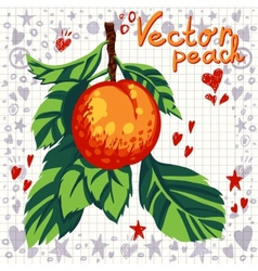 fresh peach with leaves vector image
