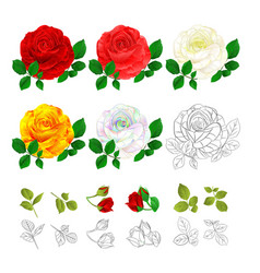 rose pink red white yellow colored and outline vector image