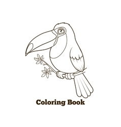 Toucan bird cartoon coloring book vector image vector image