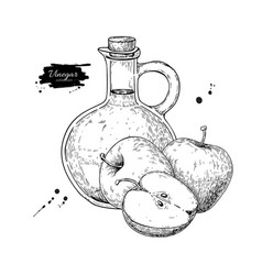 Apple vinegar drawing hand draw vector