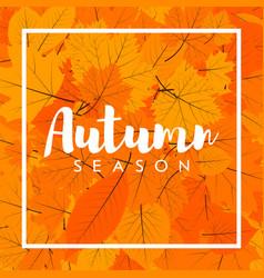 Autumn new season of sales and discounts deals vector