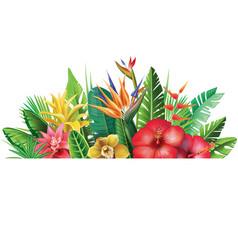 banner from tropical plants vector image