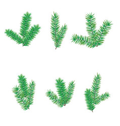 green branchesfir tree for merry christmas or vector image