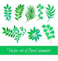 Set of floral collection with leaves vector
