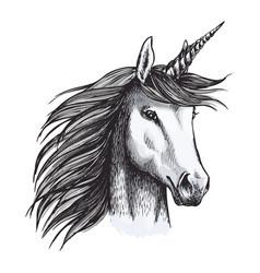 unicorn mystic magic horse animal sketch vector image vector image