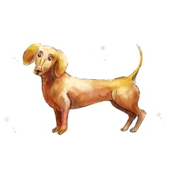 Brown Dachshund vector