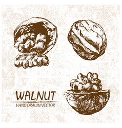 Digital walnut hand drawn vector