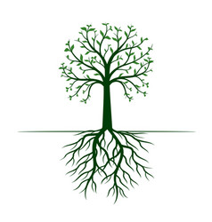 Green tree with leaves and roots vector