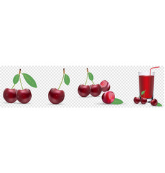 highly realistic ripe juicy cherry natural vector image
