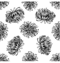 seamless pattern with black and white aster vector image