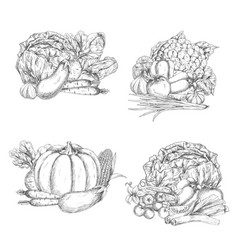 sketch of vegetables or veggies harvest vector image