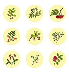 wild berries set vector image