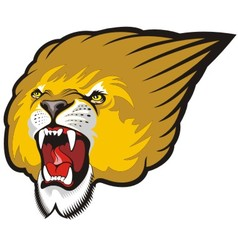 Lion head roaring vector image