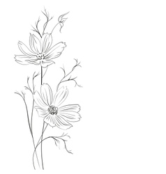 Buttercup flower vector image