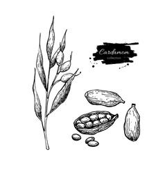 Cardamom hand drawn set with vector