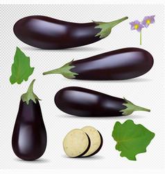 Fresh eggplant isolated on white background vector