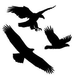 Set of black silhouette three eagles vector image