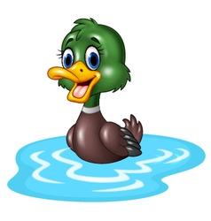 Cartoon duck floats on water vector image