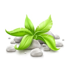 plant with green leaves in vector image