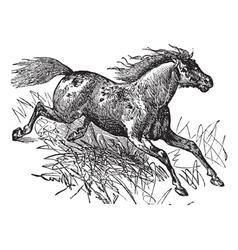 Mustang vintage engraving vector image