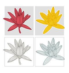 hand drawn lotus flower vector image