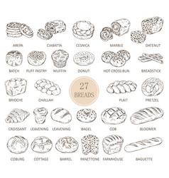 Isolated sketches bread types vector