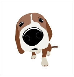 Jack Russell Terrier with large head and nose vector