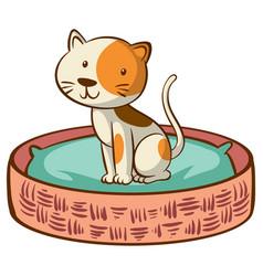 kitten sitting on bed on white background vector image