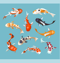 Koi carps koi japanese fish vector