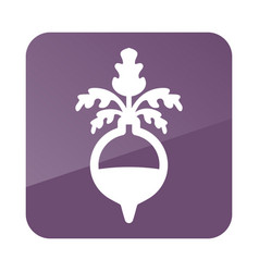 Rutabaga or swede outline icon vegetable root vector