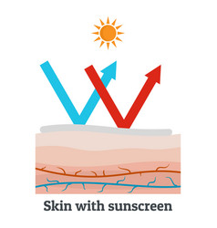 Skin with sunscreen icon flat style vector