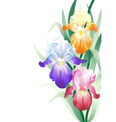 holidays card with Iris flowers bouquet vector image vector image