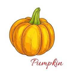 Pumpkin vegetable isolated sketch icon vector image vector image