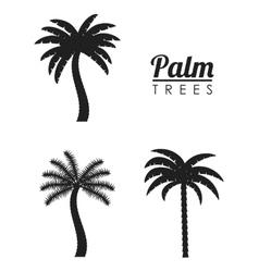 Palm tree nature plant design vector image