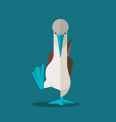 Blue-footed booby vector