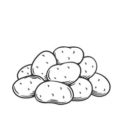Bunch potatoes vector