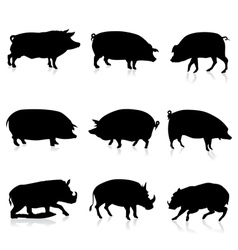 Farm Pigs and Wild Boars Silhouette vector image