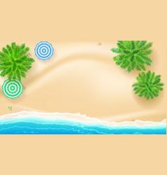 Palm trees sun umbrellas and starfish on seashore vector