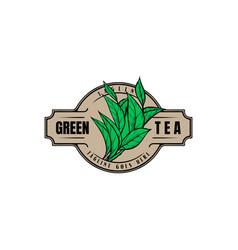 Vintage retro green tea leaf leaves label logo vector