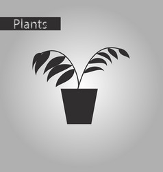 black and white style icon ficus vector image