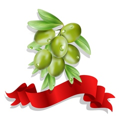 olive branch with red ribbon on white background vector image vector image