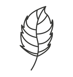 nature leaf isolated icon design vector image