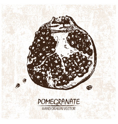 digital detailed pomegranate hand drawn vector image vector image