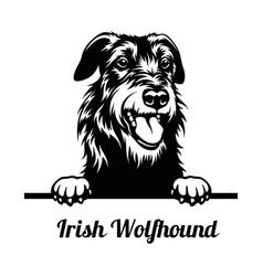 Peeking dog - irish wolfhound breed - head vector
