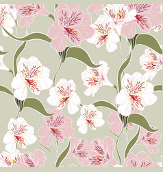 pink alstroemeria lily flower vector image