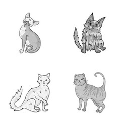 Turkish angora british longhair and other species vector