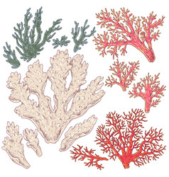 colored corals set vector image vector image